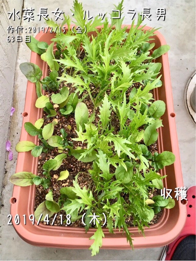 f:id:Mt_vegetable:20190418222906j:image