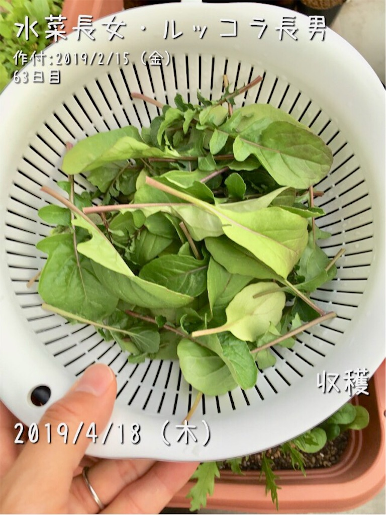 f:id:Mt_vegetable:20190418222913j:image