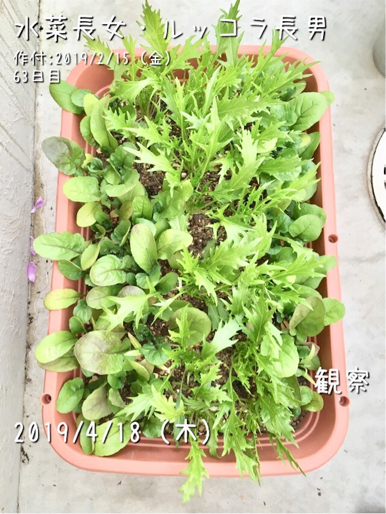 f:id:Mt_vegetable:20190418222923j:image