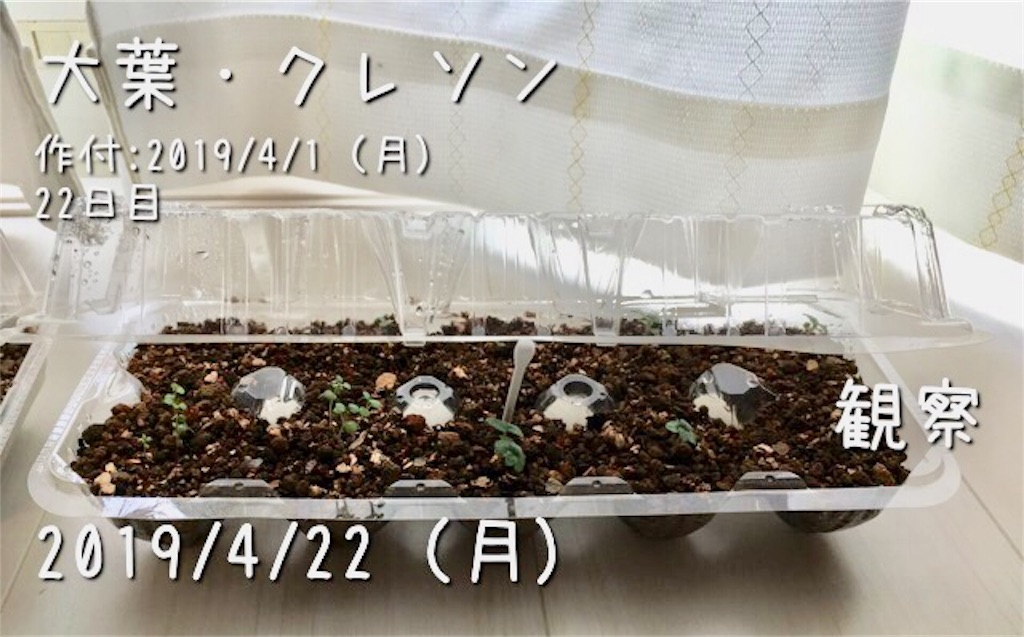 f:id:Mt_vegetable:20190422215503j:image