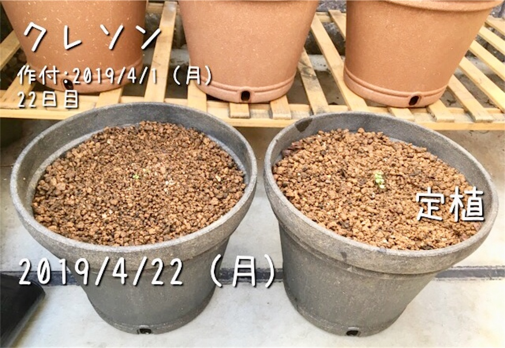f:id:Mt_vegetable:20190422215534j:image