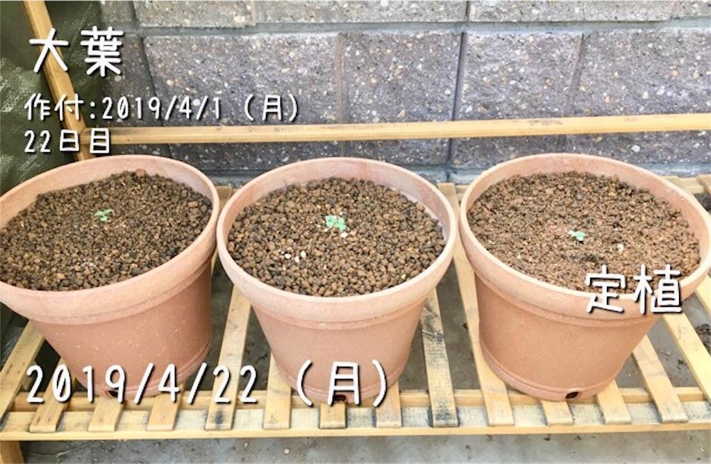 f:id:Mt_vegetable:20190422215607j:image