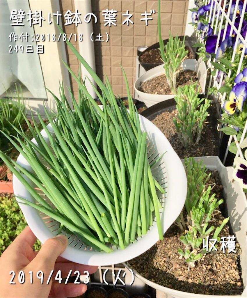 f:id:Mt_vegetable:20190423214531j:image