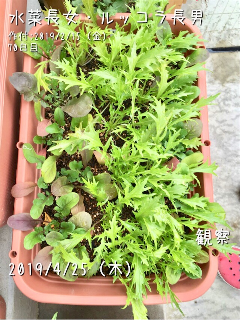 f:id:Mt_vegetable:20190426102118j:image