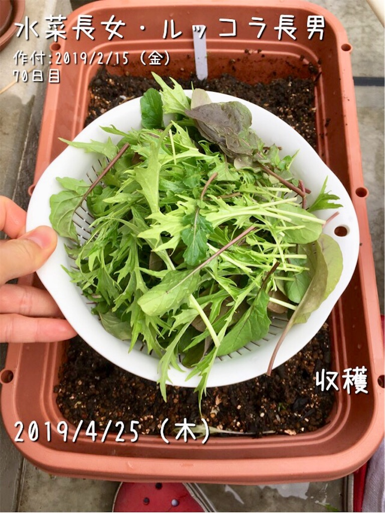 f:id:Mt_vegetable:20190426102121j:image