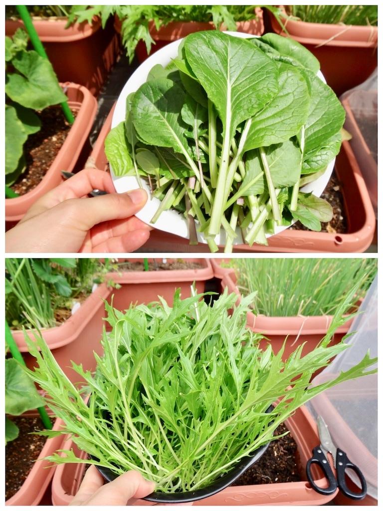 f:id:Mt_vegetable:20190501180650j:image