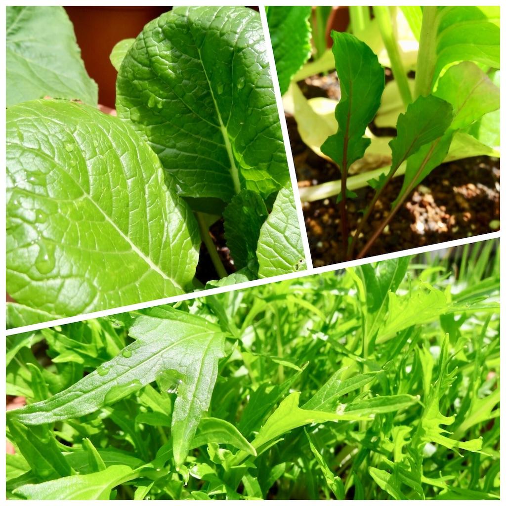 f:id:Mt_vegetable:20190501180702j:image