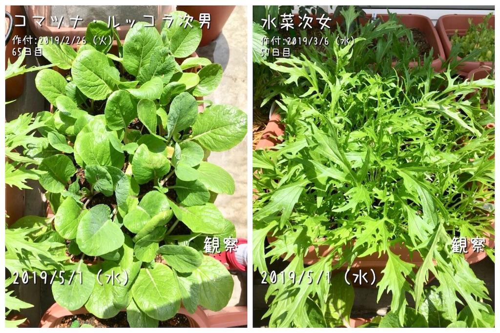 f:id:Mt_vegetable:20190501180706j:image