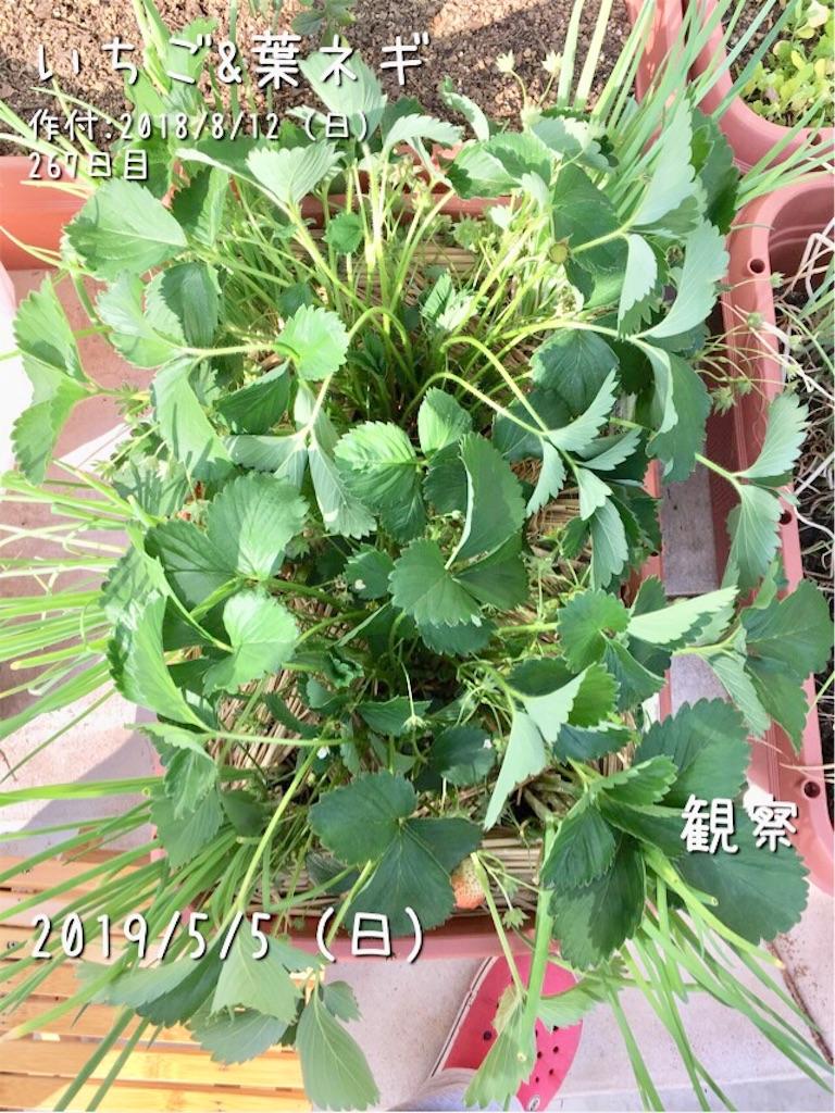 f:id:Mt_vegetable:20190505172724j:image