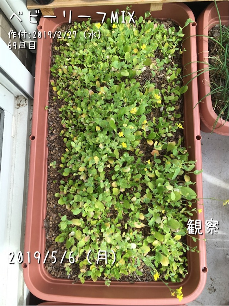 f:id:Mt_vegetable:20190506205500j:image