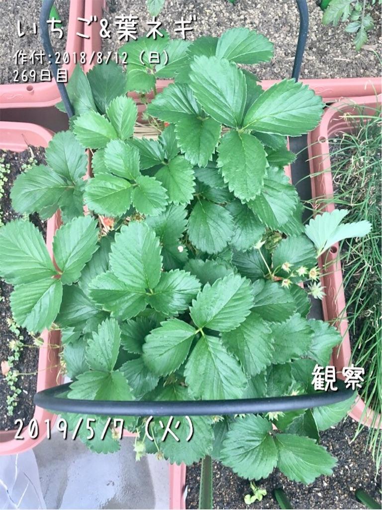 f:id:Mt_vegetable:20190508171631j:image