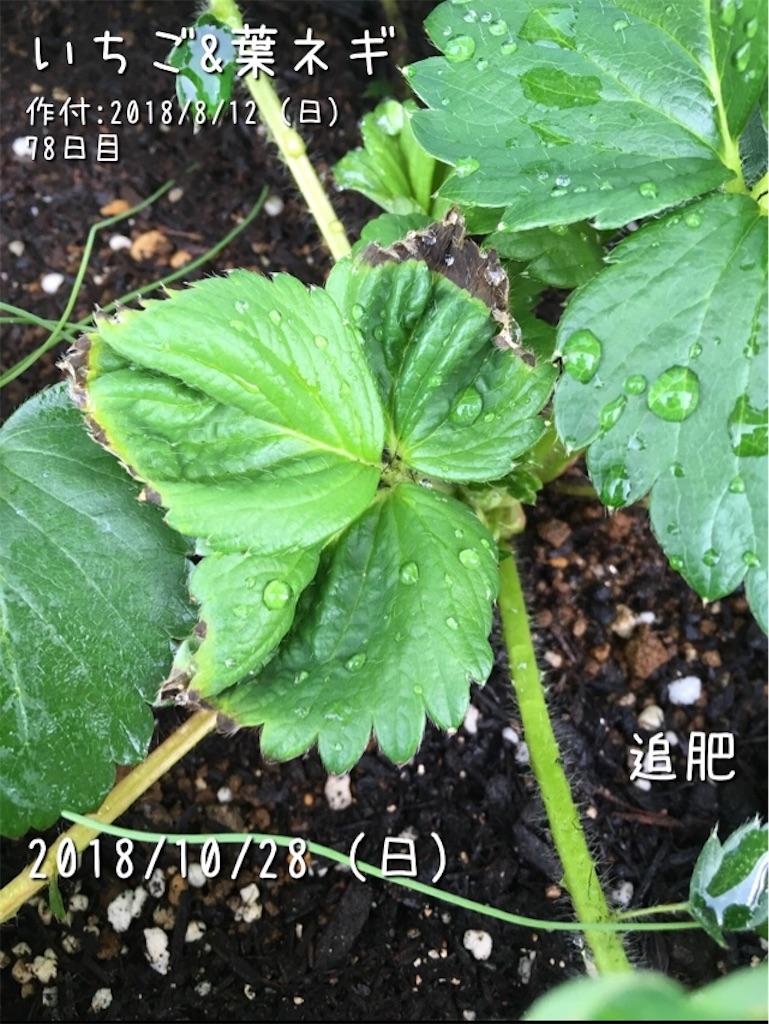 f:id:Mt_vegetable:20190508173852j:image