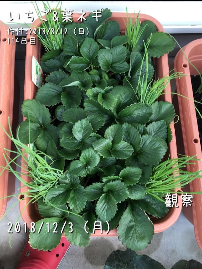 f:id:Mt_vegetable:20190508173855j:image