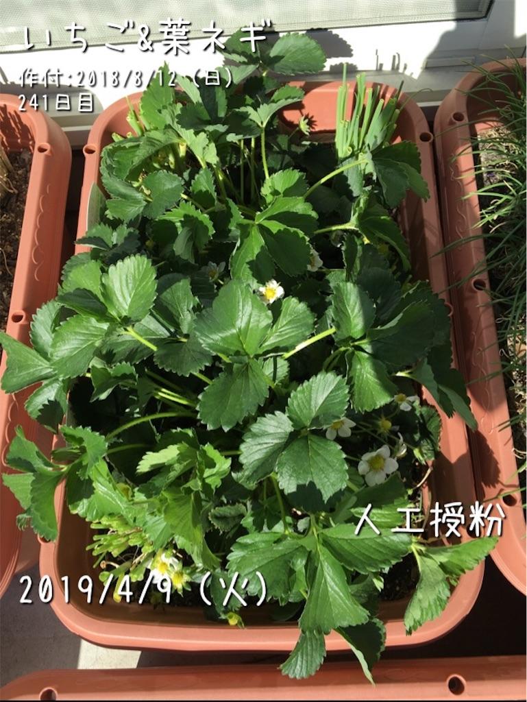 f:id:Mt_vegetable:20190508173858j:image