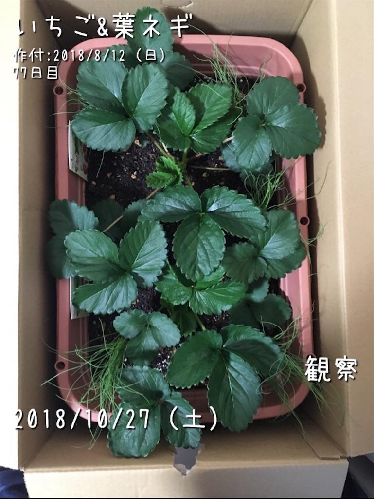 f:id:Mt_vegetable:20190508173909j:image