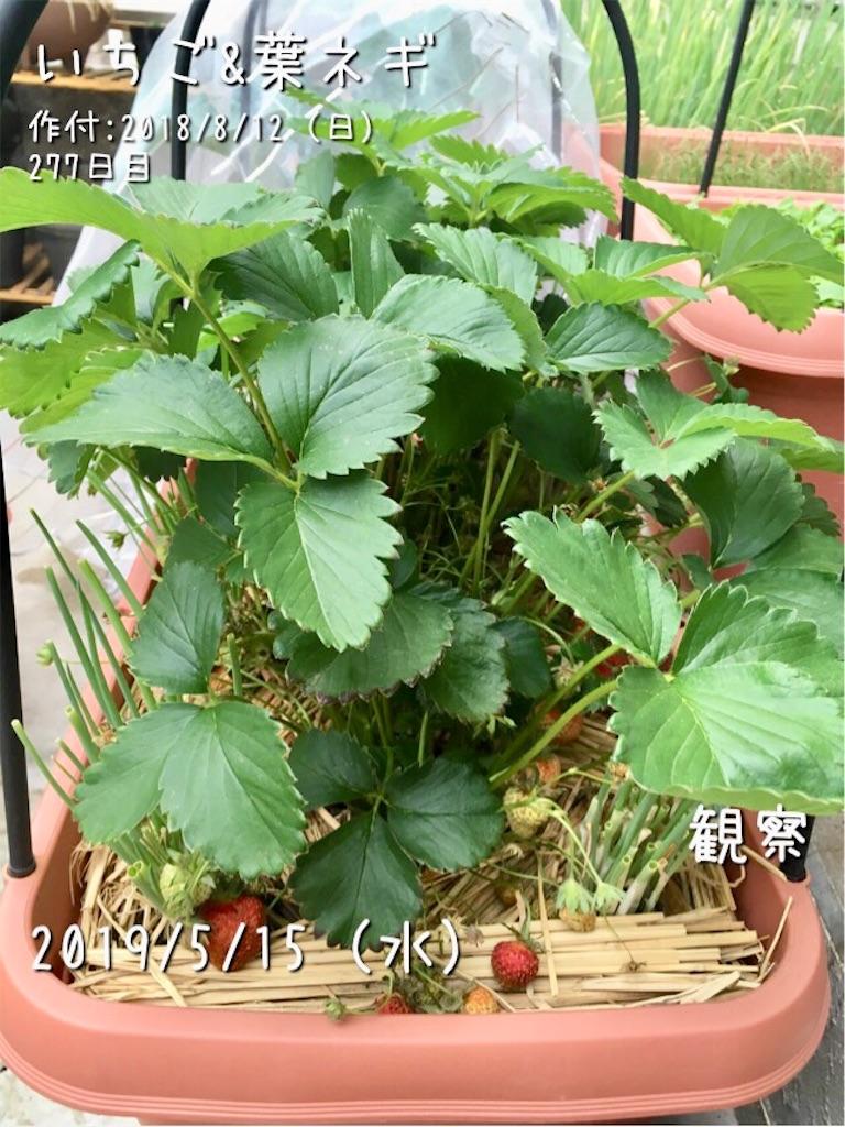 f:id:Mt_vegetable:20190516113913j:image