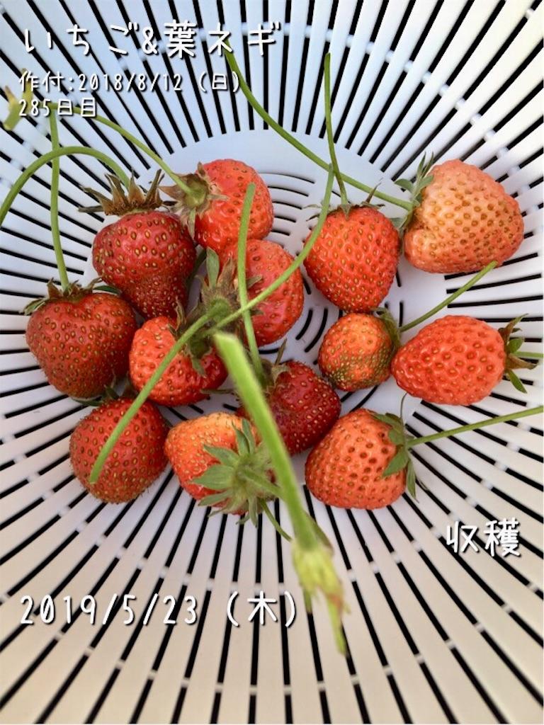 f:id:Mt_vegetable:20190523222304j:image