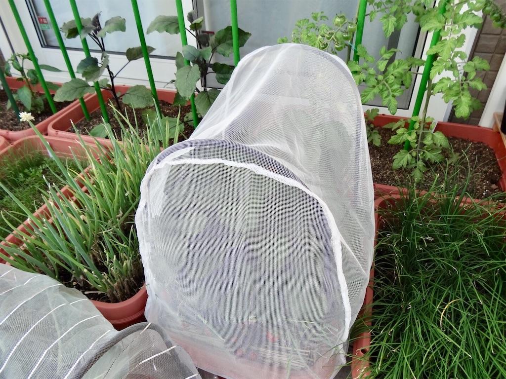 f:id:Mt_vegetable:20190523222345j:image