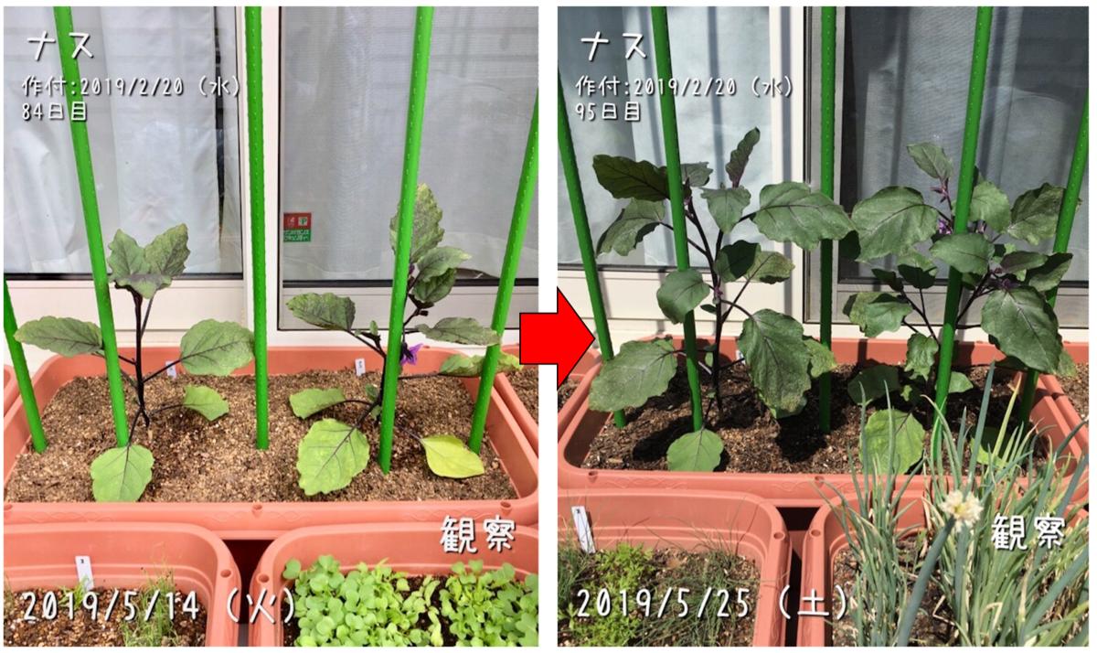 f:id:Mt_vegetable:20190526121239p:plain