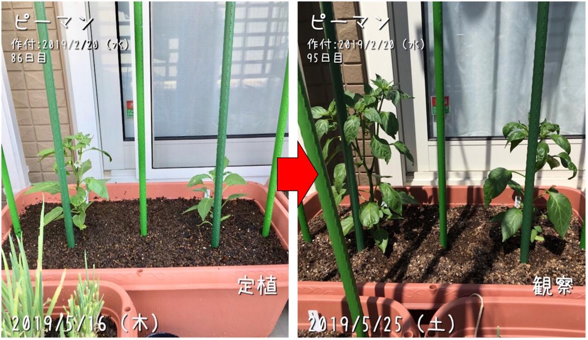 f:id:Mt_vegetable:20190526121455p:plain