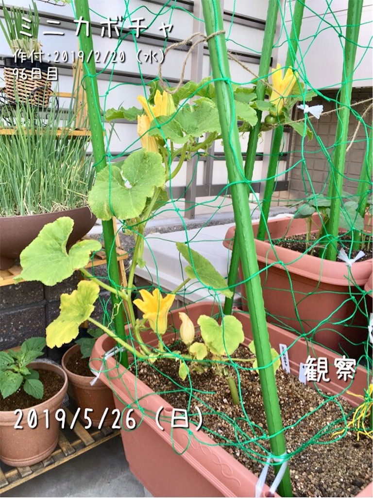 f:id:Mt_vegetable:20190526124503j:image