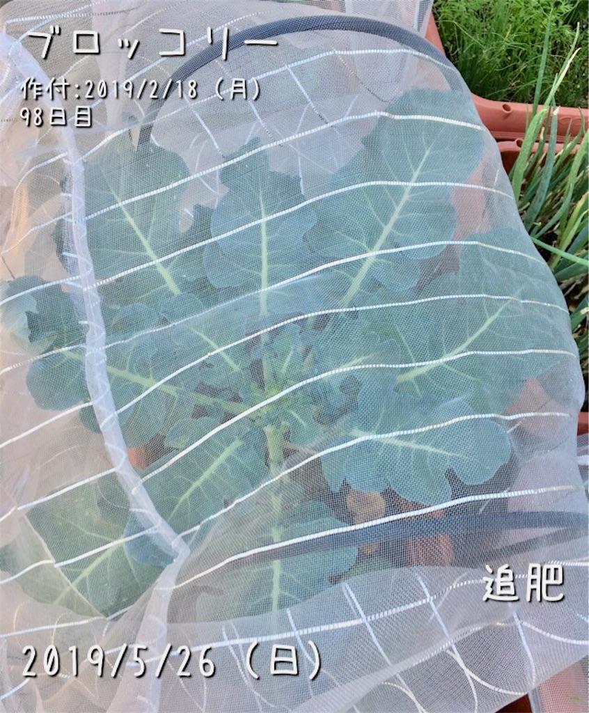 f:id:Mt_vegetable:20190526215301j:image
