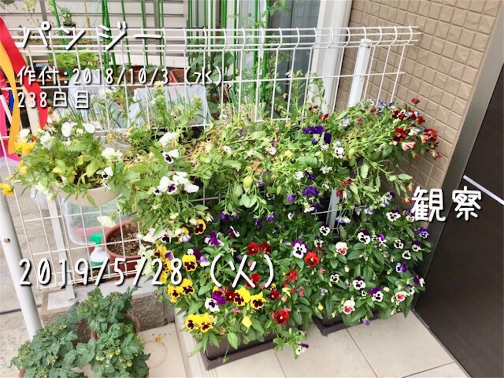 f:id:Mt_vegetable:20190529221424j:image