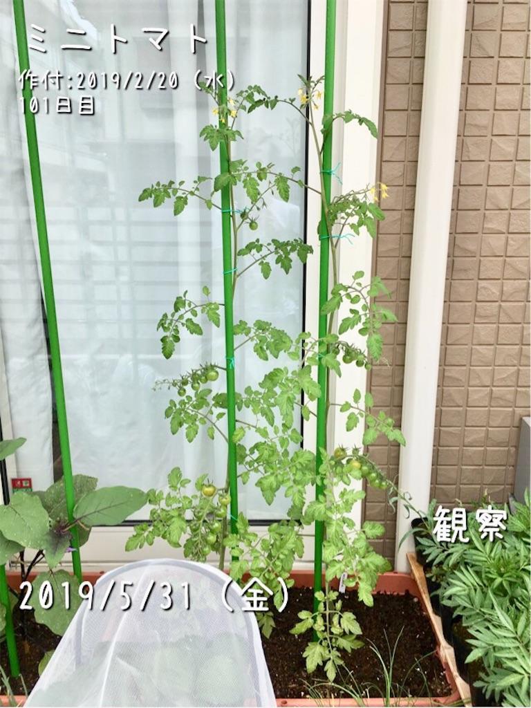 f:id:Mt_vegetable:20190601174720j:image