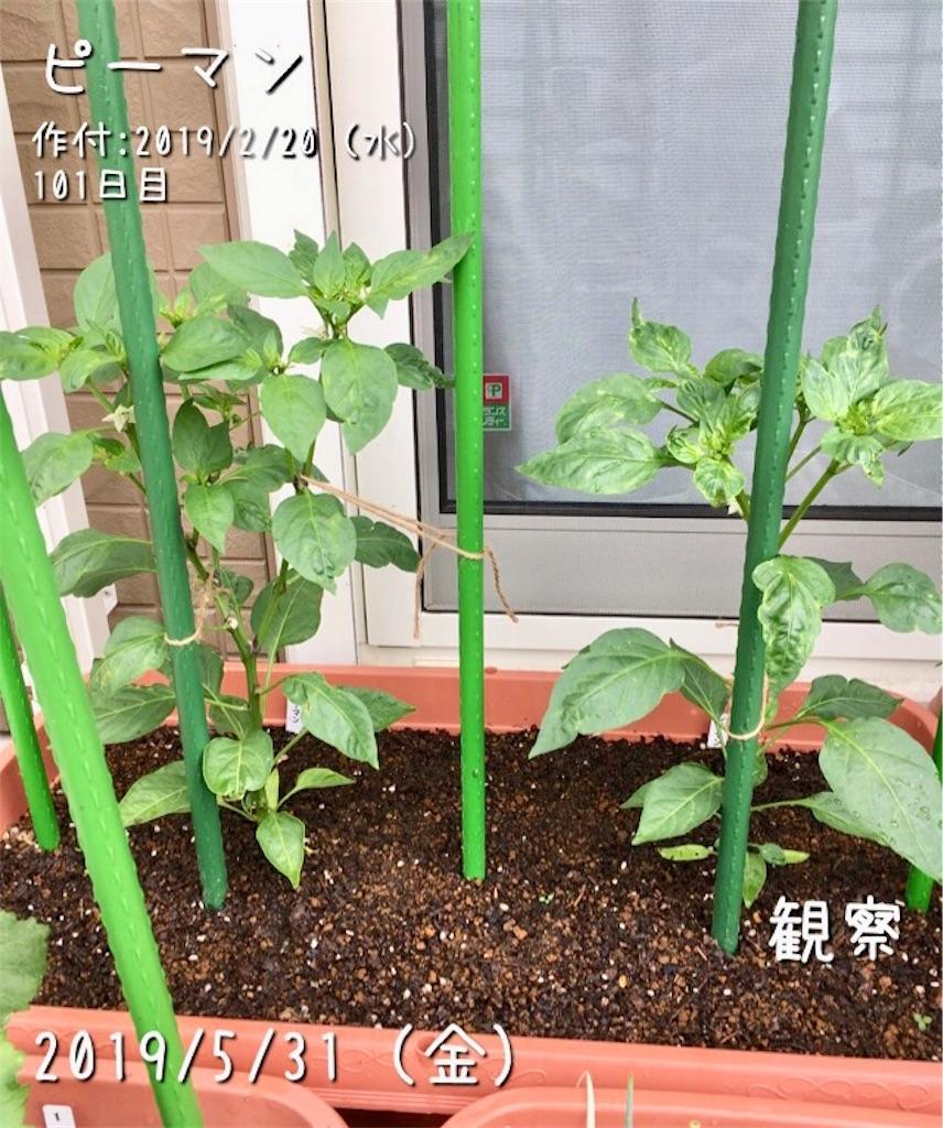 f:id:Mt_vegetable:20190601174737j:image