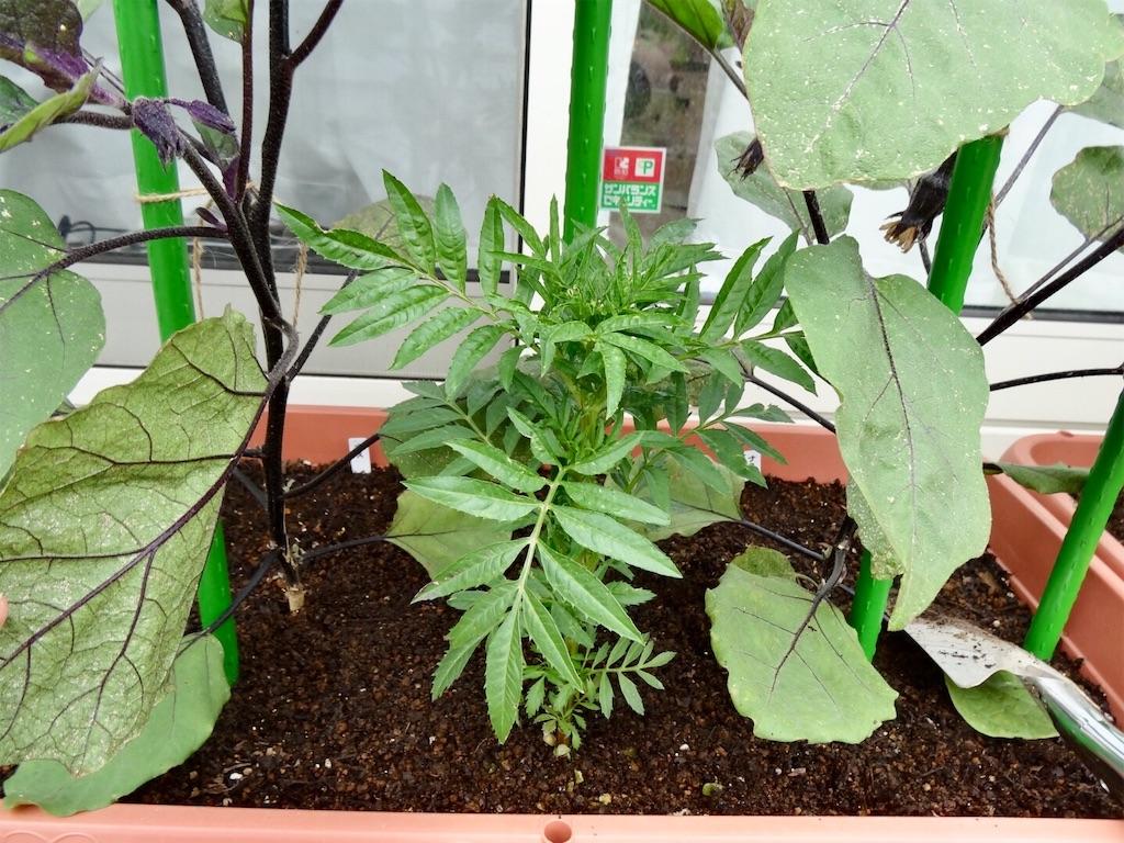 f:id:Mt_vegetable:20190601174745j:image