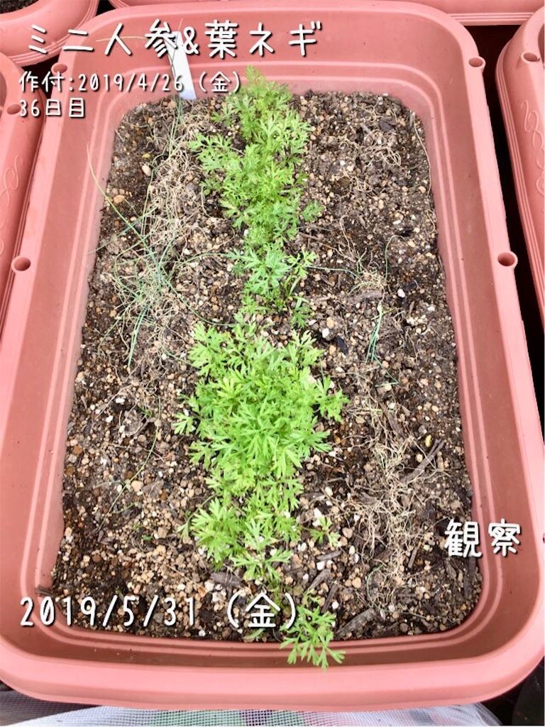 f:id:Mt_vegetable:20190601221330j:image