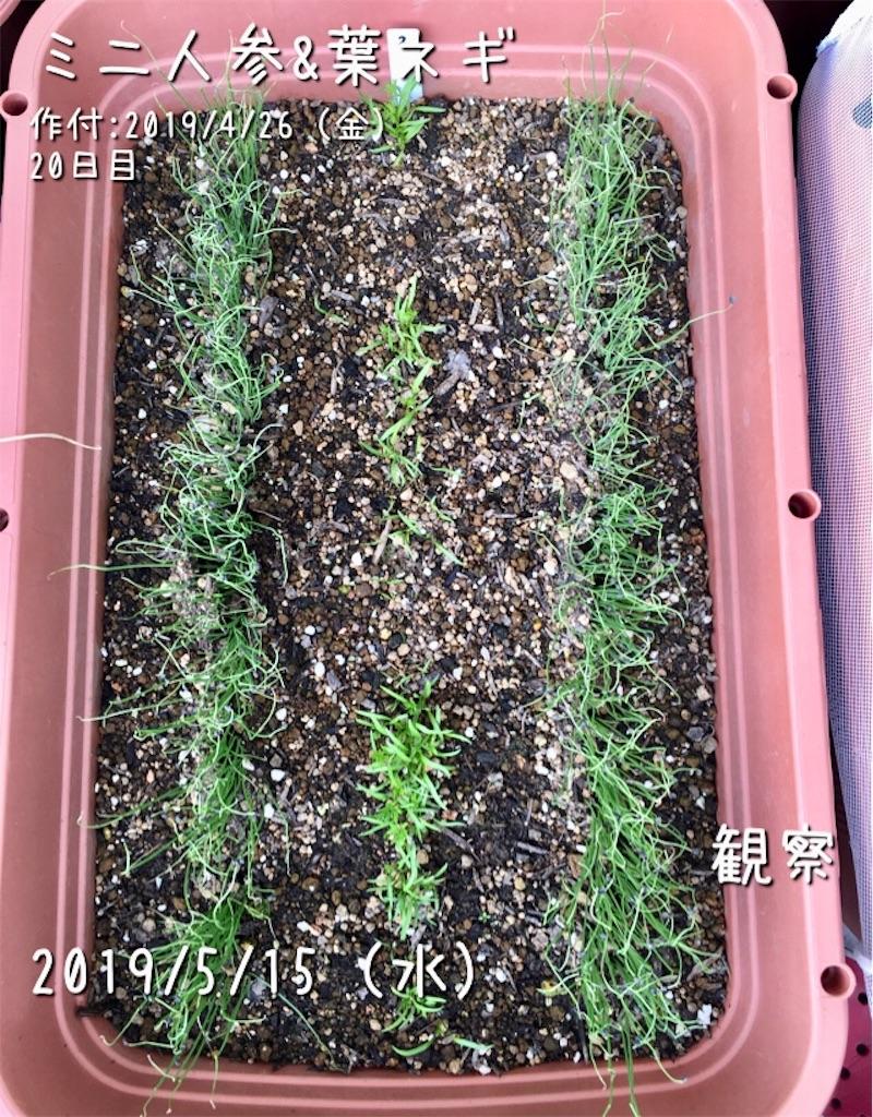 f:id:Mt_vegetable:20190601221351j:image