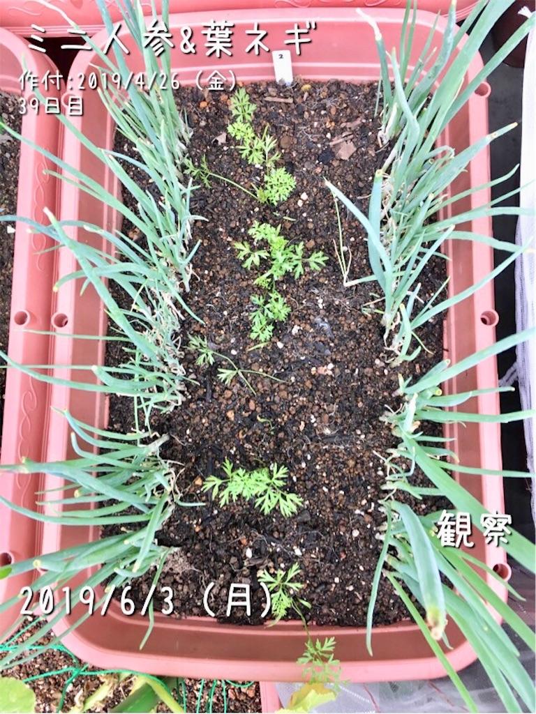 f:id:Mt_vegetable:20190603201223j:image