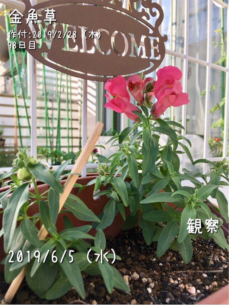 f:id:Mt_vegetable:20190605202524j:image
