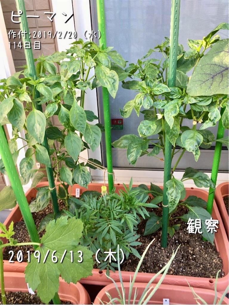 f:id:Mt_vegetable:20190614110814j:image