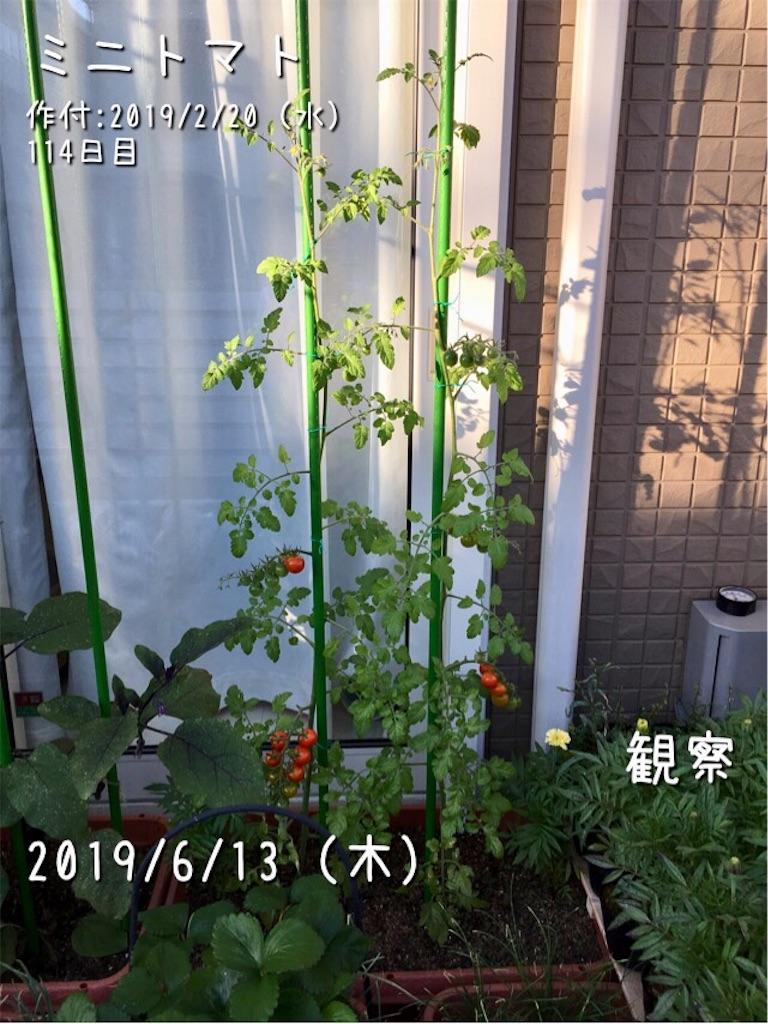 f:id:Mt_vegetable:20190614110819j:image