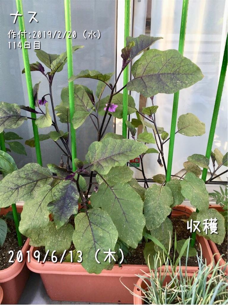 f:id:Mt_vegetable:20190614110834j:image
