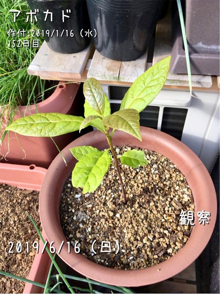 f:id:Mt_vegetable:20190617034101j:image