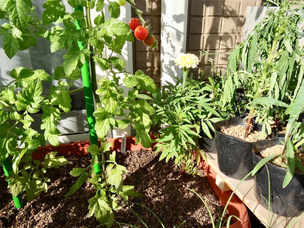 f:id:Mt_vegetable:20190617034108j:image