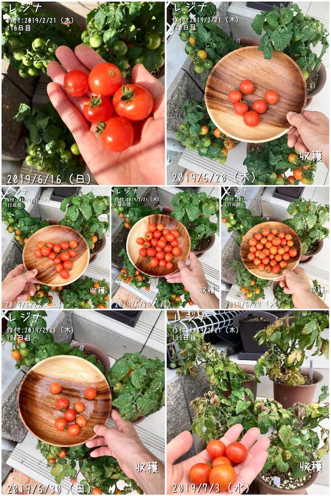 f:id:Mt_vegetable:20190717222622j:image