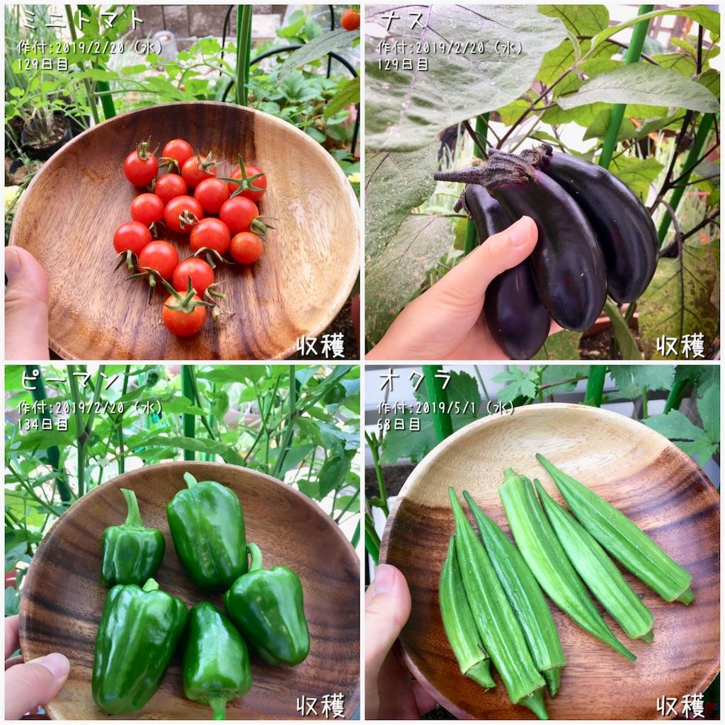 f:id:Mt_vegetable:20190717222902j:image