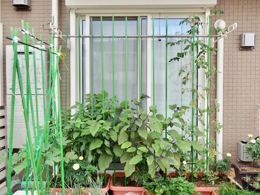 f:id:Mt_vegetable:20190718083114j:image