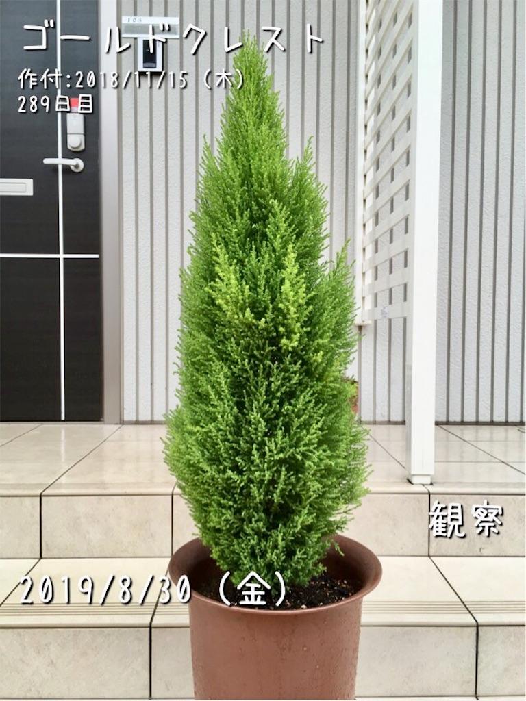 f:id:Mt_vegetable:20190830110015j:image