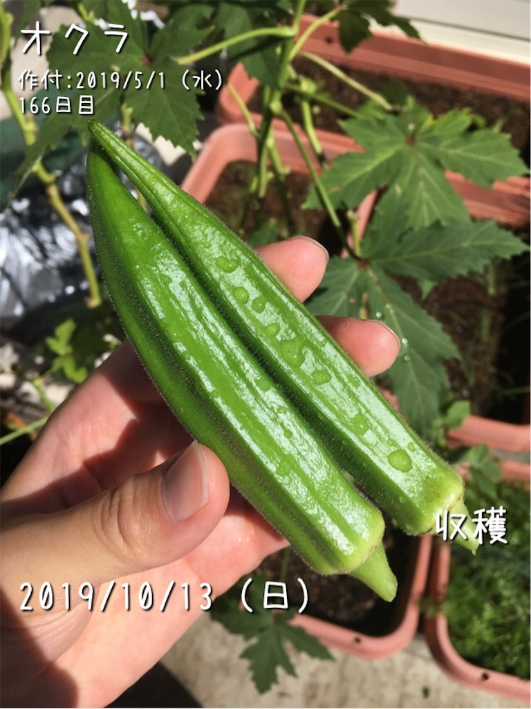 f:id:Mt_vegetable:20191013181518j:image