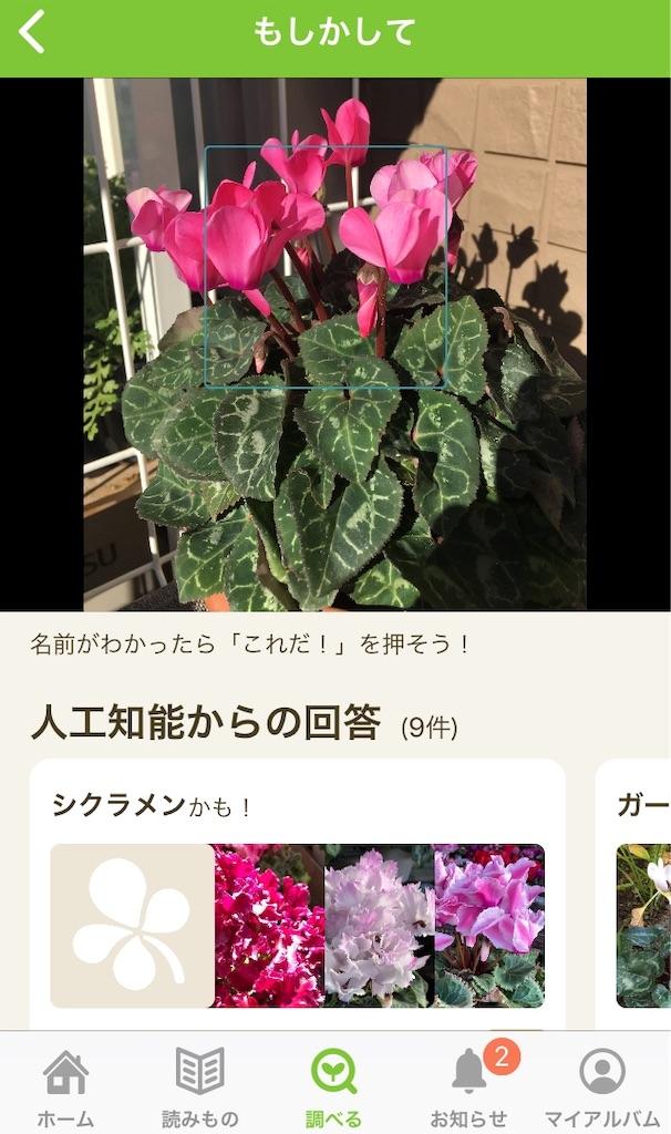 f:id:Mt_vegetable:20191208133213j:image