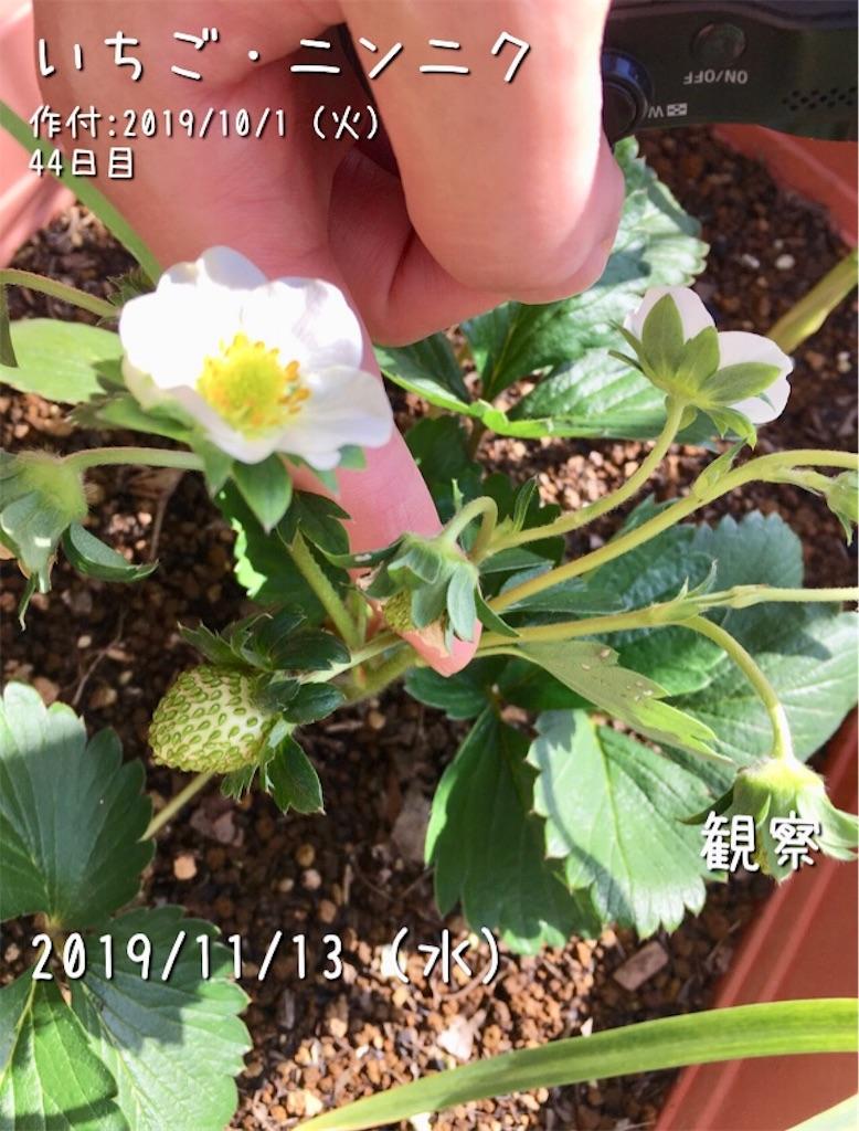 f:id:Mt_vegetable:20191211140216j:image