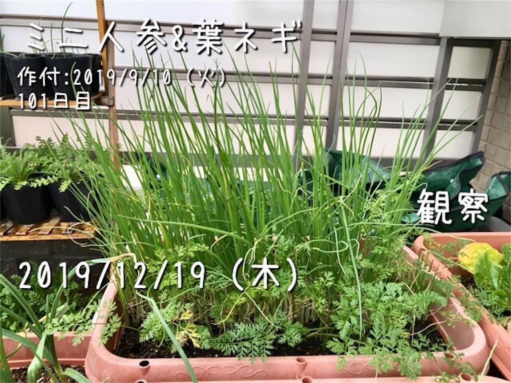 f:id:Mt_vegetable:20191219134216j:image