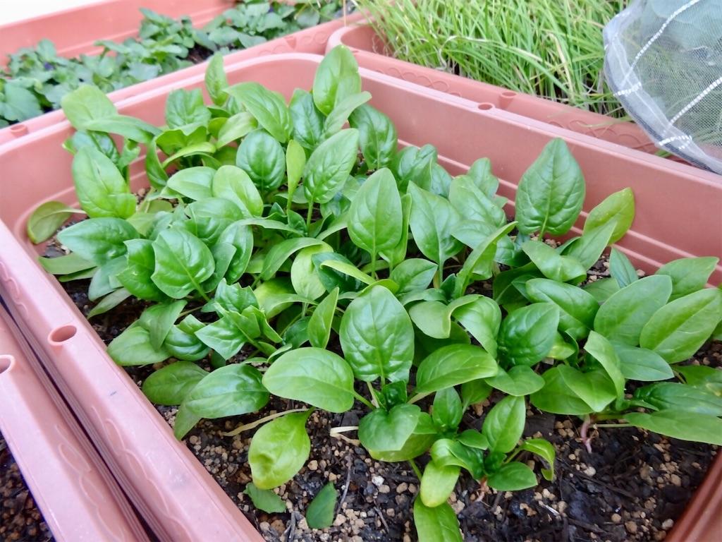 f:id:Mt_vegetable:20200113203345j:image