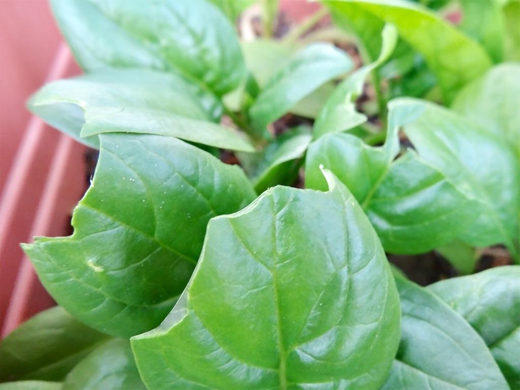 f:id:Mt_vegetable:20200113203350j:image
