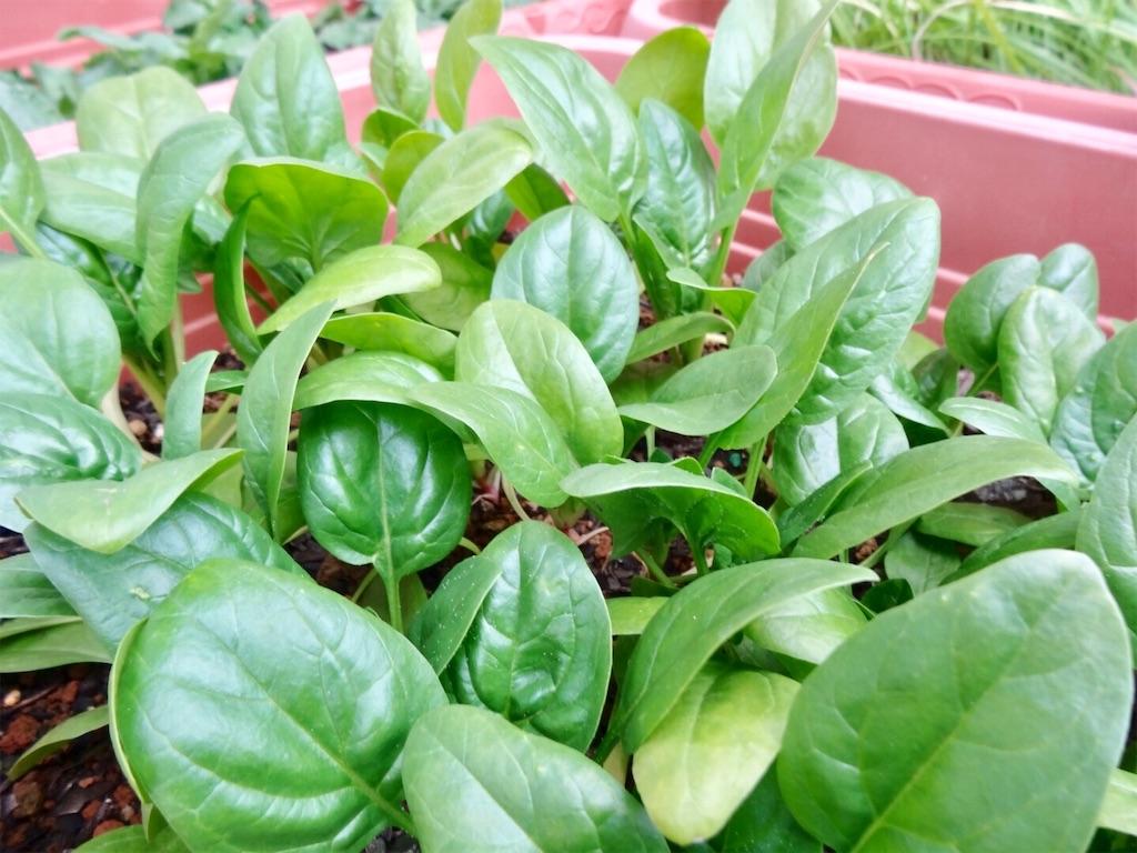 f:id:Mt_vegetable:20200113203358j:image